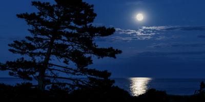 White-Moon-FI
